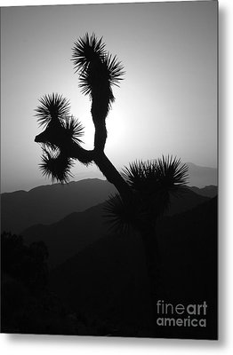 New Photographic Art Print For Sale Joshua Tree At Sunset Black And White Metal Print by Toula Mavridou-Messer