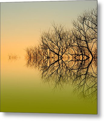 Olive Branches Metal Print by Sharon Lisa Clarke