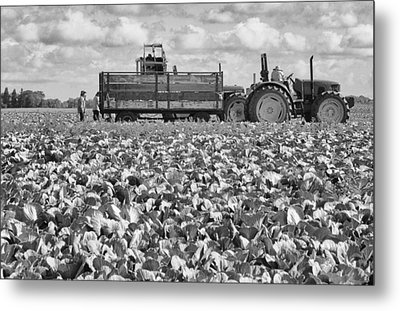 Metal Print featuring the photograph On The Farm by Ricky L Jones
