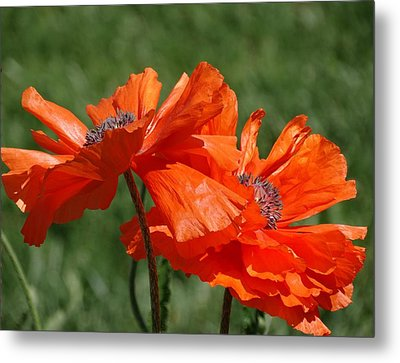Orange Poppies Metal Print by Rebecca Overton