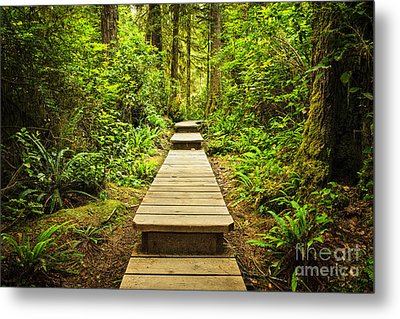 Path In Temperate Rainforest Metal Print by Elena Elisseeva