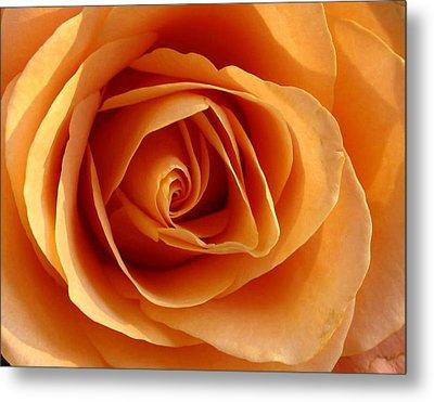 Peach Rose Metal Print by Gerry Bates