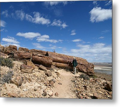 Petrified Forest, Argentina Metal Print by Science Photo Library