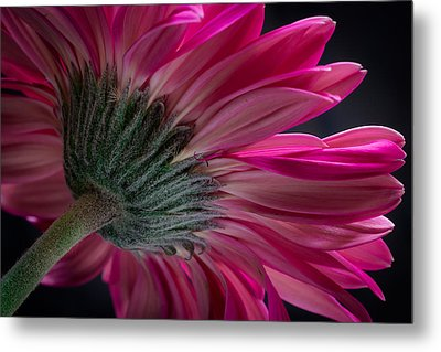 Metal Print featuring the photograph Pink Flower by Edgar Laureano