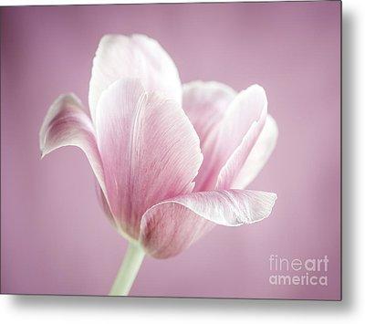 Pink Tulip Metal Print by Elena Elisseeva