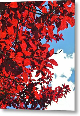 Plum Tree Cloudy Blue Sky 3 Metal Print by CML Brown