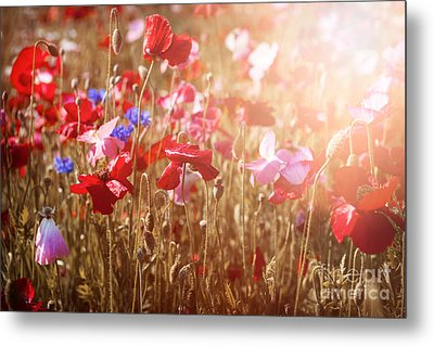 Poppies In Sunshine Metal Print