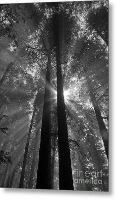 Presence Metal Print by Chuck Flewelling