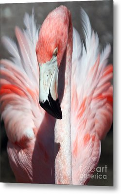 Pretty Flamingo Metal Print