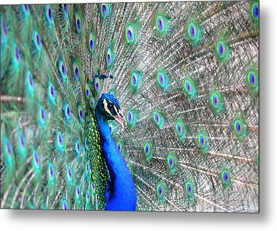 Metal Print featuring the photograph Proud by Deena Stoddard