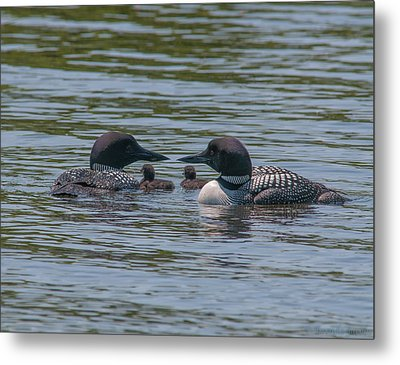 Proud Parents Metal Print by Brenda Jacobs