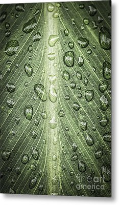 Raindrops On Green Leaf Metal Print