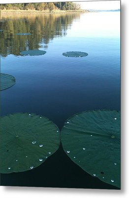 Rayburn Lilly Pads Metal Print