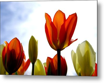 Metal Print featuring the photograph Reaching For The Sun by Marilyn Wilson