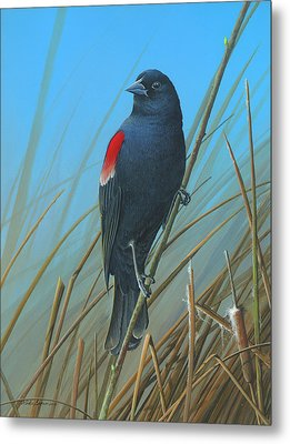 Metal Print featuring the painting Red-winged Black Bird by Mike Brown