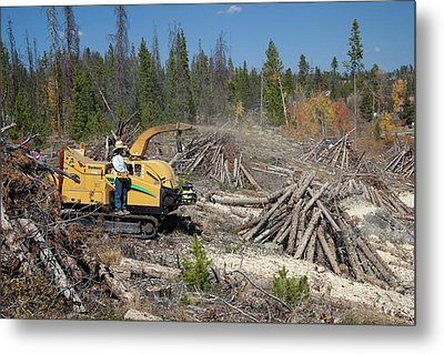 Removing Dead Trees Metal Print by Jim West