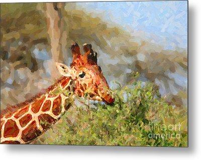 Reticulated Giraffe Kenya Metal Print