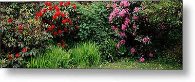 Rhododendrons Plants In A Garden, Shore Metal Print by Panoramic Images