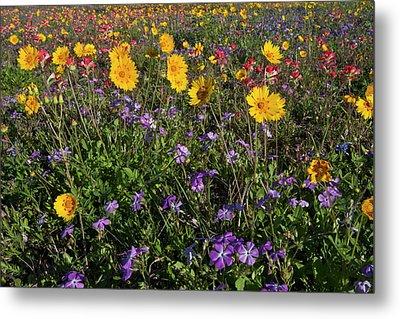 Roadside Wildflowers In Texas, Spring Metal Print