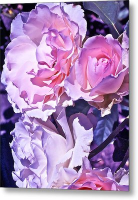 Rose 60 Metal Print