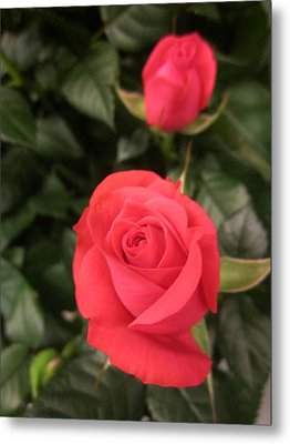 Roses In Red Metal Print