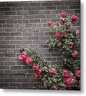 Roses On Brick Wall Metal Print by Elena Elisseeva