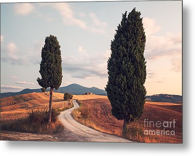 Rural Road With Cypress Tree In Tuscany Italy Metal Print by Matteo Colombo