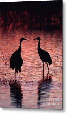 Sandhill Cranes Metal Print by Steven Ralser