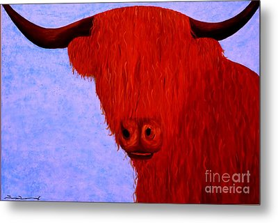 Scottish Highlands Cow Metal Print by Tim Townsend