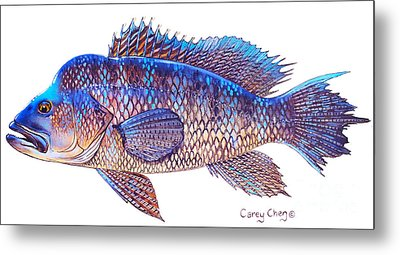 Sea Bass Metal Print by Carey Chen
