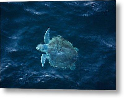 Sea Turtle Metal Print by Tammy Schneider