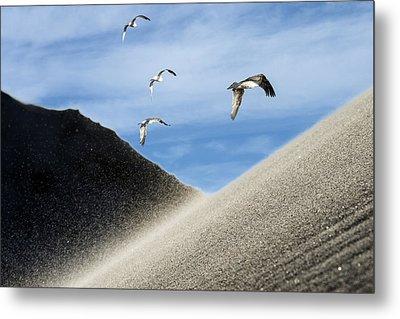 Seagulls Metal Print by Michael Mogensen