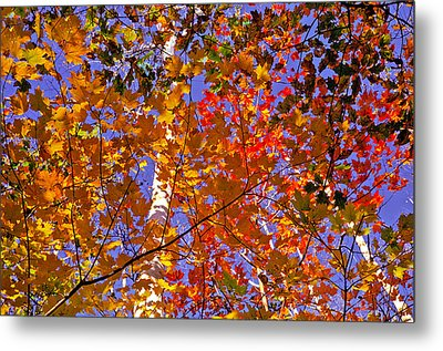 Metal Print featuring the photograph Shades Of Fall by Dennis Bucklin
