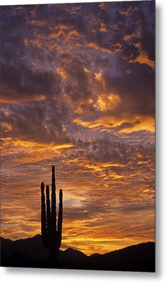 Silhouetted Saguaro Cactus Sunset At Dusk With Dramatic Clouds Metal Print