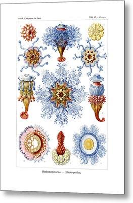 Siphonophorae Metal Print