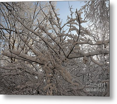 Snow Covered Tree And Sun Metal Print