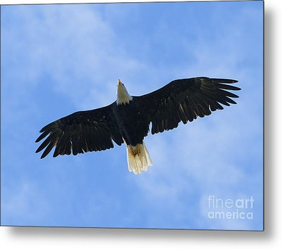 Soaring High 2 Hdr Metal Print by Sharon Talson