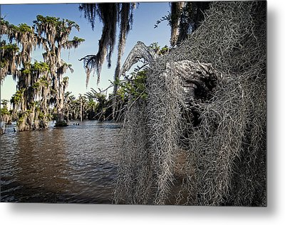 Spanish Moss Metal Print by Andy Crawford