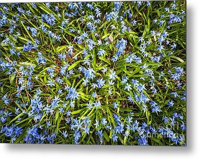 Spring Blue Flowers Metal Print