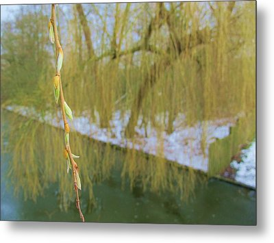 Spring Is In The Air Metal Print by Valia Bradshaw