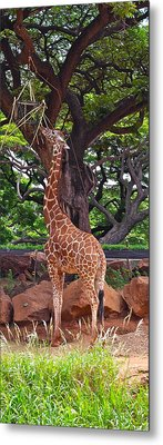Stretching It Metal Print by Michele Myers
