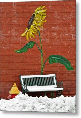 Sunflower And Snow Metal Print by Chris Berry