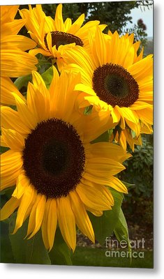 Metal Print featuring the photograph Sunflowers by Arlene Carmel