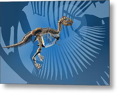 T. Rex Dinosaur Skeleton Metal Print by Carol and Mike Werner