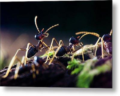 Termites Metal Print by Melvyn Yeo