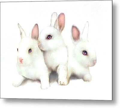 Three Bunnies Metal Print