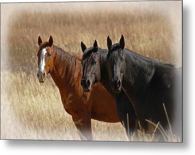 Three Horses Metal Print by Ernie Echols