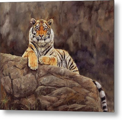 Tiger Metal Print by David Stribbling