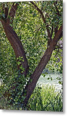 Metal Print featuring the photograph Tree At Stow Lake by Kate Brown