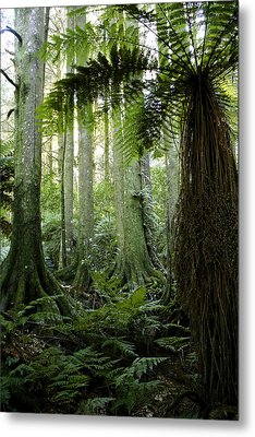 Tropical Forest  Metal Print by Les Cunliffe